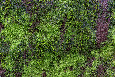 Moss Rock Print by Randy Walton