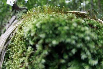 Moss Original by Yuli Seperi