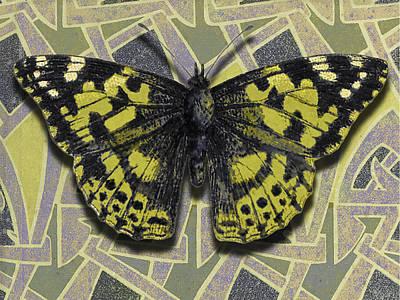 Plumb Painting - Moth 13 by Robert Todd