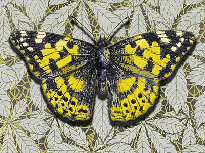 Plumb Painting - Moth 14 by Robert Todd