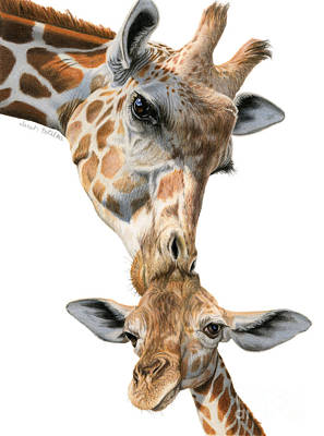 Nature Art Drawing - Mother And Baby Giraffe by Sarah Batalka