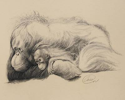 Orangutan Drawing - Mother Love by Albert Casson