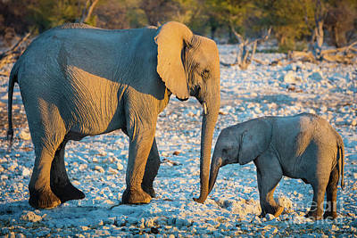 Mother Elephant Photograph - Motherly Love by Inge Johnsson