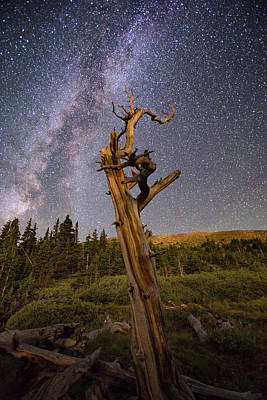 Colorado Photograph - Mount Goliath Tree by Angie Harris