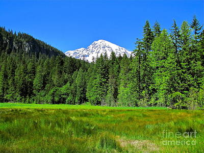 Nature Photograph - Mount Rainier Meadow by Sean Griffin