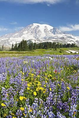 Photograph - Mount Rainier National Park by Craig Tuttle