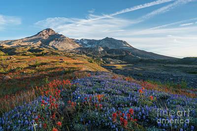 Mount St Helens Fields Of Spring Wildflowers Print by Mike Reid
