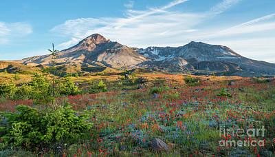 Mount St Helens Fields Of Wildflowers Print by Mike Reid