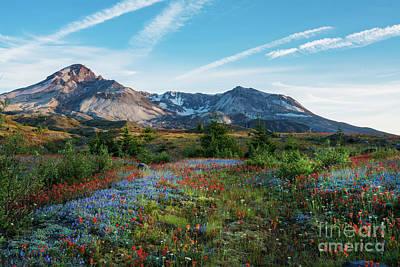 Mount St Helens Glorious Field Of Spring Wildflowers Print by Mike Reid