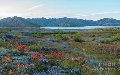 Mount St Helens Spirit Lake Fields Of Spring Wildflowers Print by Mike Reid