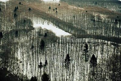 Mountain Forest Print by Vittorio Chiampan