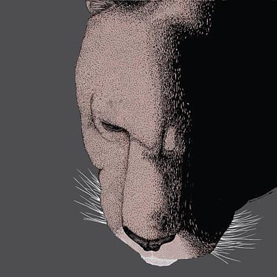 Mountain Lion Print by Karl Addison