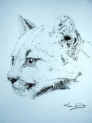 Mountain Lion Print by Ken Day