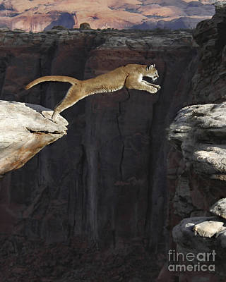 Lion Photograph - Mountain Lion - One Chance by Wildlife Fine Art