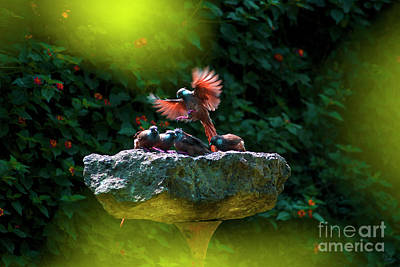 Stone Trough Photograph - Mouse Birds-reunion by Morris Keyonzo