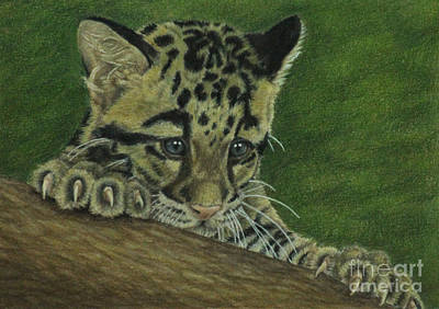 Leopard Drawing - Mowgli by Jennifer Watson