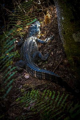 Alligator Photograph - Mr Alley Gator by Marvin Spates