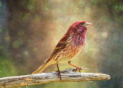 Finch Digital Art - Mr Finch Afternoon Bokeh by Bill Tiepelman