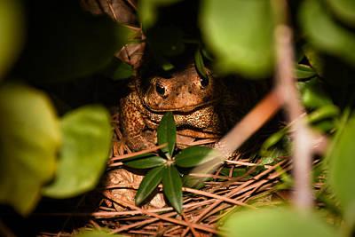 Hiding Photograph - Mr Frog by Alessandro Della Pietra