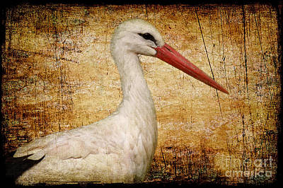 Stork Mixed Media - Mr. Stork by Angela Doelling AD DESIGN Photo and PhotoArt