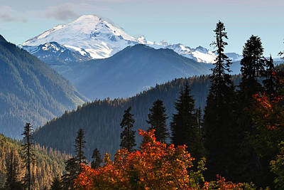 Aster Photograph - Mt Baker From The Yellow Aster Trail by Alvin Kroon