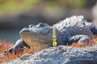 Crocodile Photograph - Mugger Crocodile, India by B. G. Thomson