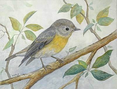 Mugimaki Flycatcher Original by Sandy Clift