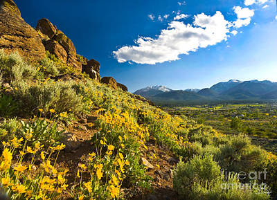 Mule Ear Flowers With Mount Rose Print by Vance Fox