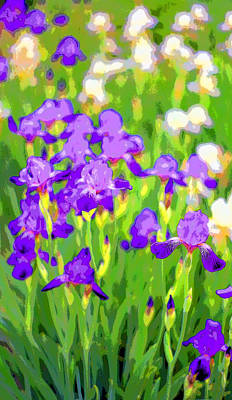 Mums Iris Garden Image Print by Paul Price