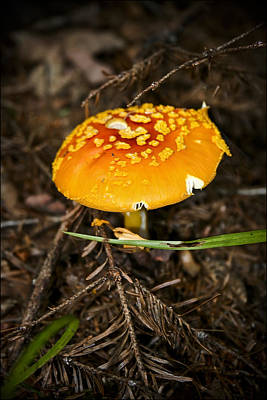 Photograph - Mushroom by Nora Blansett