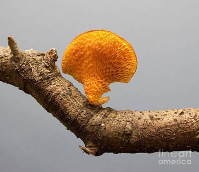 Mushroom Print by Robert Sander