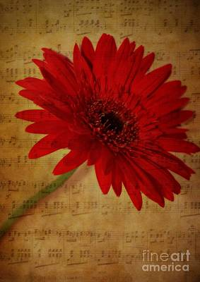 Old Sheet Music Mixed Media - Musical Gerbera by Clare Bevan