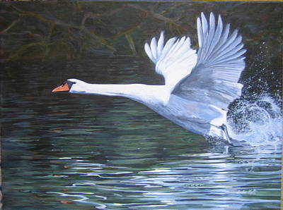 Swans... Painting - Mute Swan Taking Off by Anda Kett