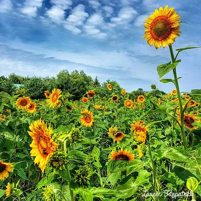 Sunflowers Photograph - My Field Of Dreams by Lauren Fitzpatrick