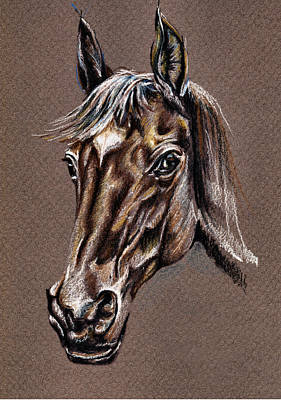 Horse Drawing - My Horse Portrait by Daliana Pacuraru