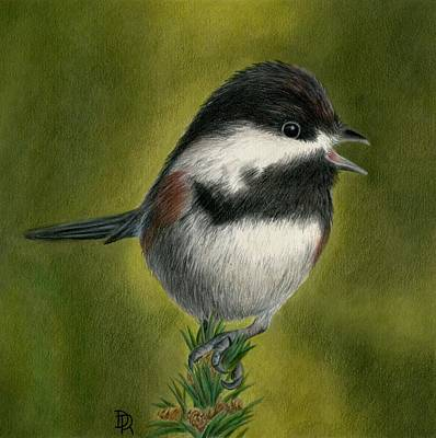 Chickadee Drawing - My Little Chickadee by Diana Ranstrom