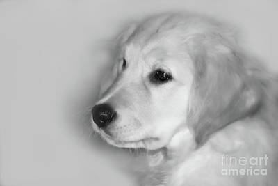 Puppies Digital Art - My Mission Is Love by Cathy  Beharriell