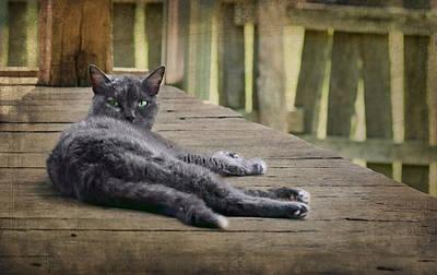 Attitude Photograph - My Porch - Cat by Nikolyn McDonald