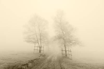 Mysterious Path Surrounding By Trees With Sepia Color Print by Mikel Martinez de Osaba
