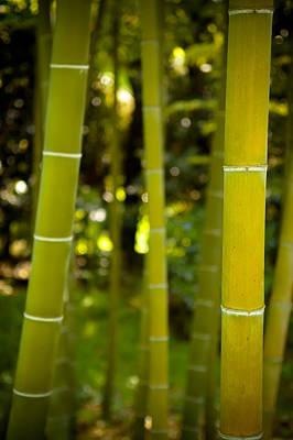 Japan Photograph - Mystical Bamboo by Sebastian Musial