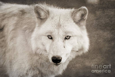 Wolf Digital Art - Mystical Creature by Ana V  Ramirez