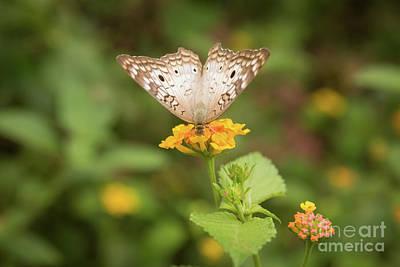 Flutter Photograph - Namaste Butterfly by Ana V Ramirez
