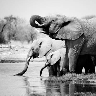 Water Photograph - Namibia Elephants by Nina Papiorek