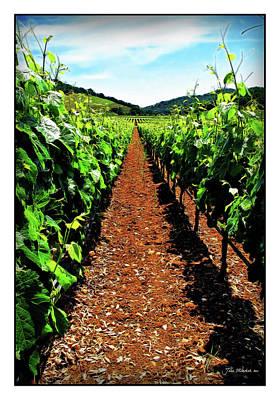 Napa Rows Of Grapes Print by Joan  Minchak