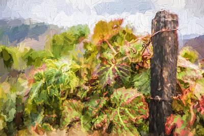 Napa Vineyard Print by David Letts