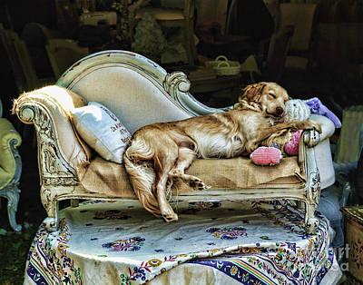 Napping Dog Promo Print by Edward Sobuta