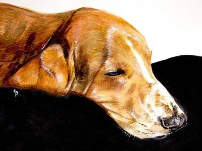 Pet Painting - Napping Nadine by Carol Blackhurst