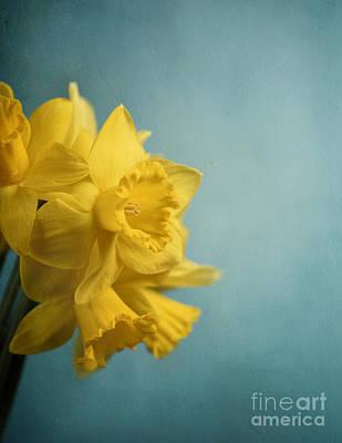 Narcissus Print by Jelena Jovanovic