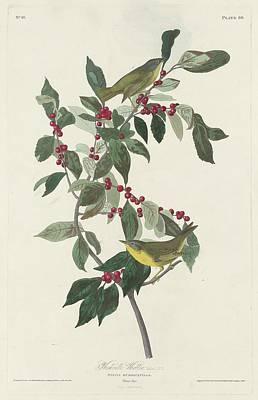 Nashville Drawing - Nashville Warbler by John James Audubon