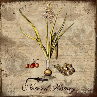 Artichoke Digital Art - Natural History Botanical Study by Tina Lavoie